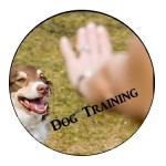 dog training 2